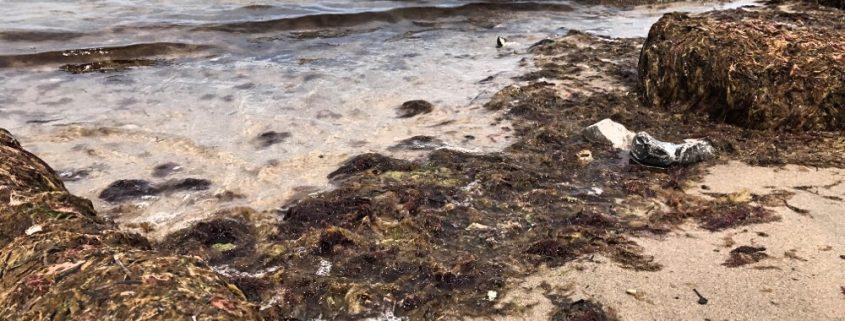 Algen am Strand